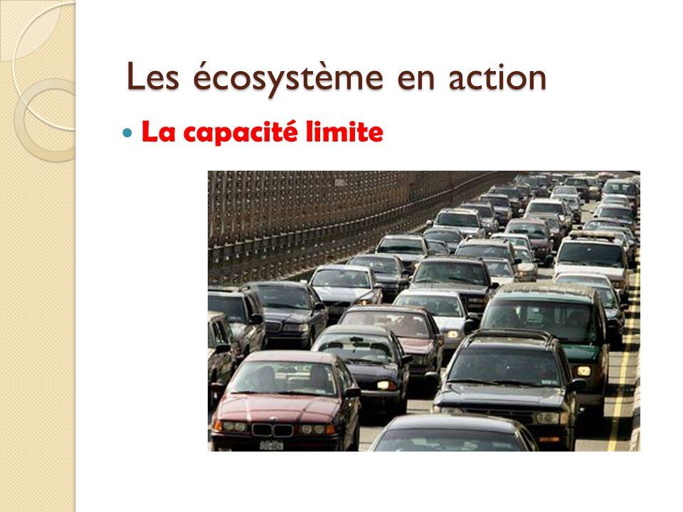 Les écosystème en action