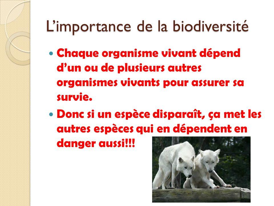 L'importance de la biodiversité