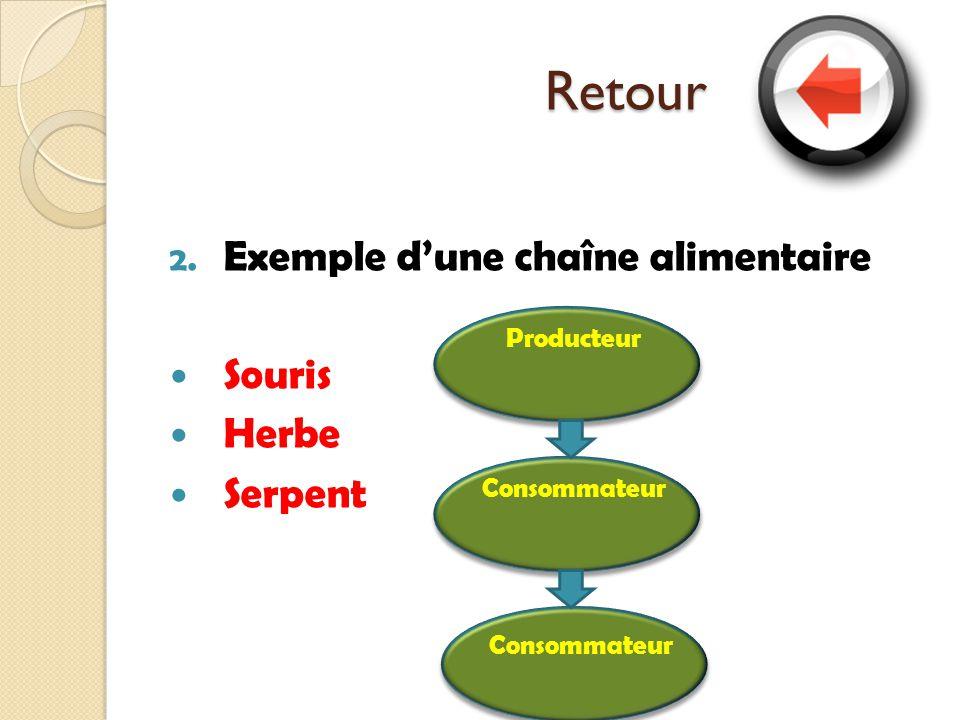 Retour Exemple d'une chaîne alimentaire Souris Herbe Serpent