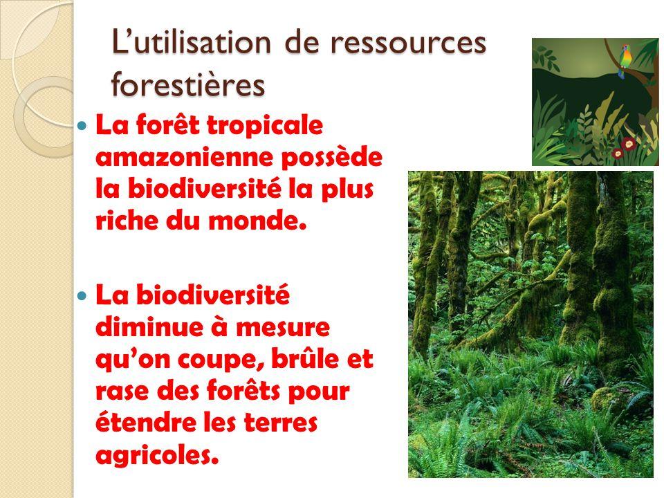 L'utilisation de ressources forestières