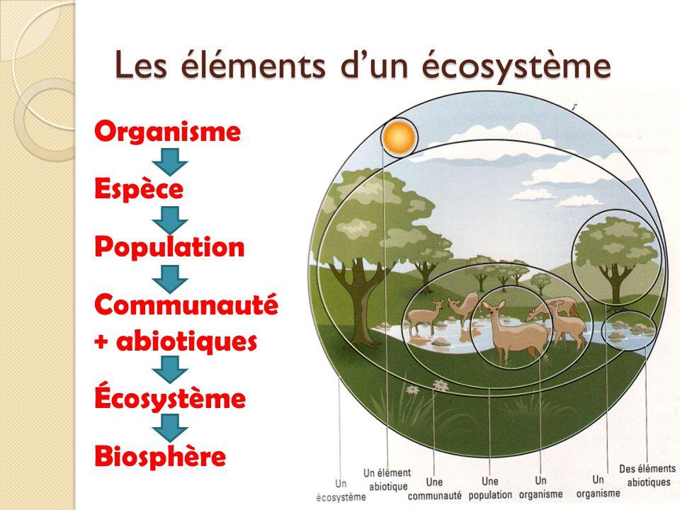 Les éléments d'un écosystème
