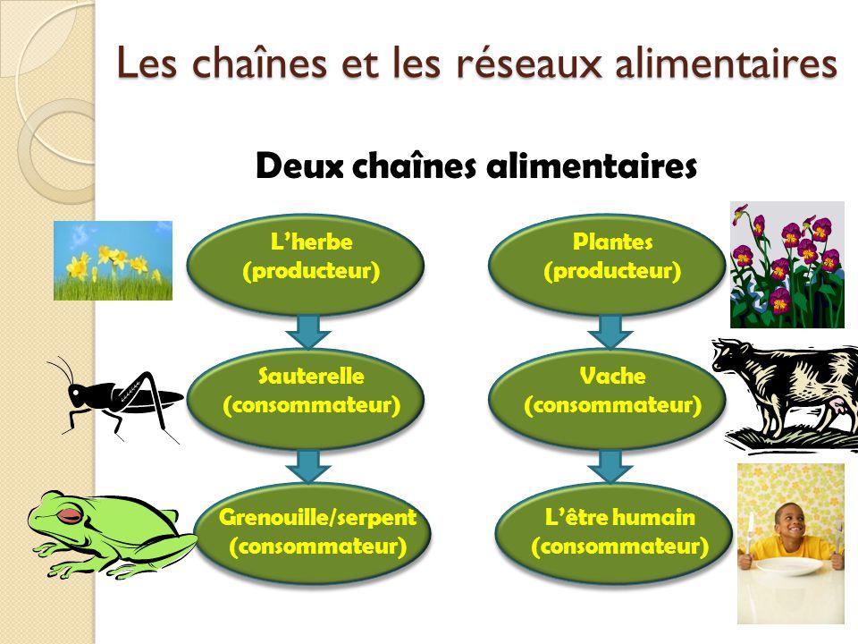Les chaînes et les réseaux alimentaires