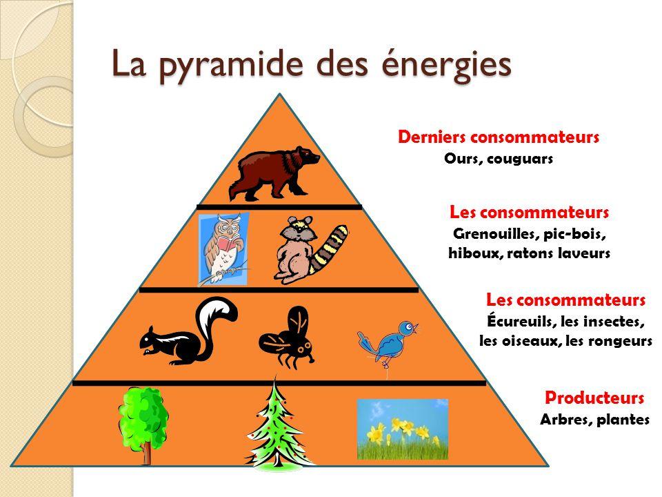 La pyramide des énergies