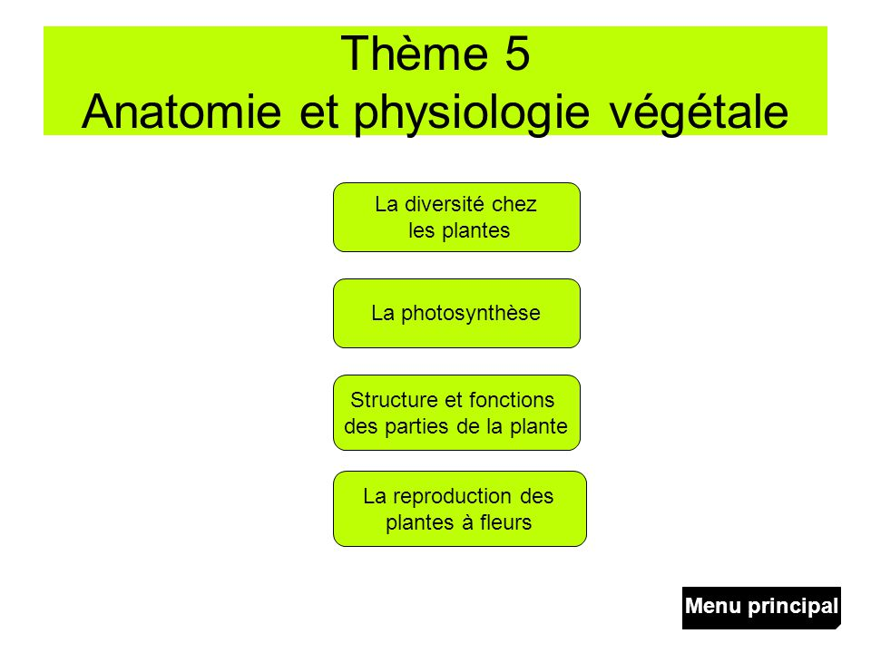 Thème 5 Anatomie et physiologie végétale