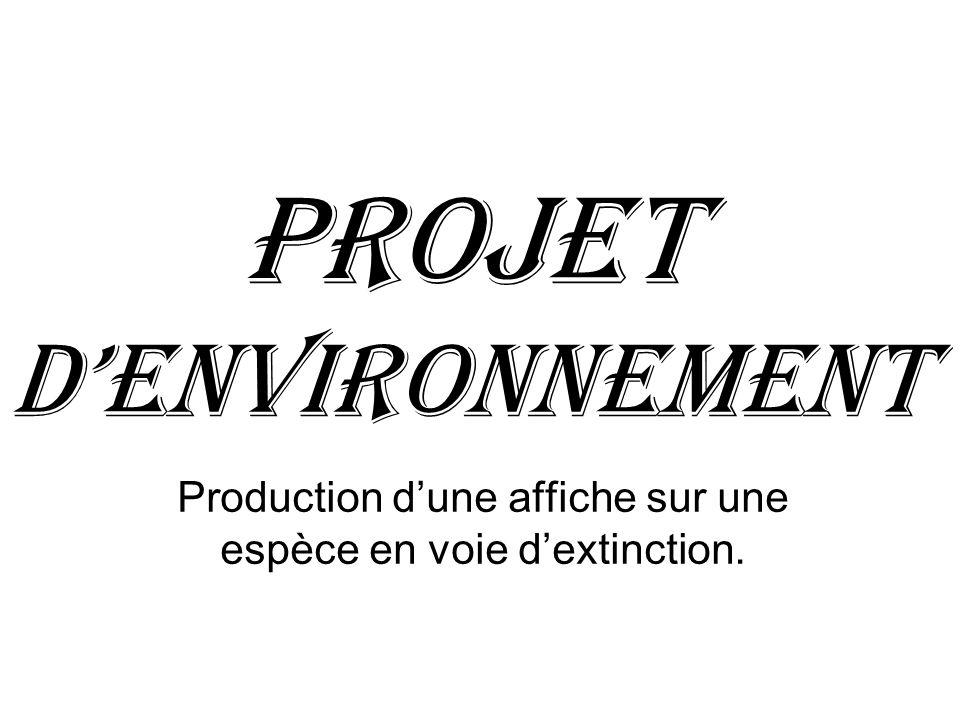 Projet d'Environnement