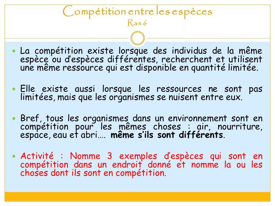 Compétition entre les espèces Ras 6