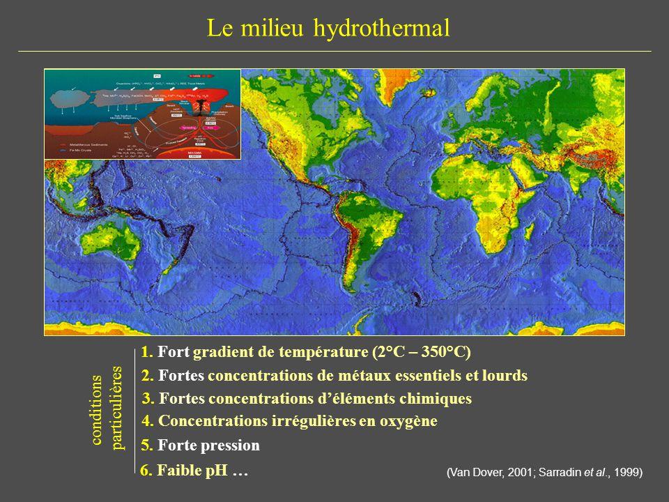 Le milieu hydrothermal