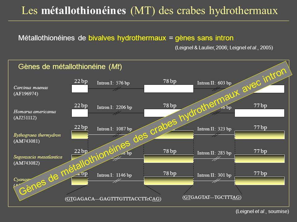 Les métallothionéines (MT) des crabes hydrothermaux