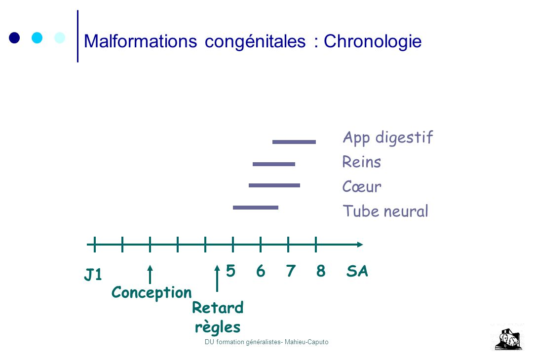 Malformations congénitales : Chronologie