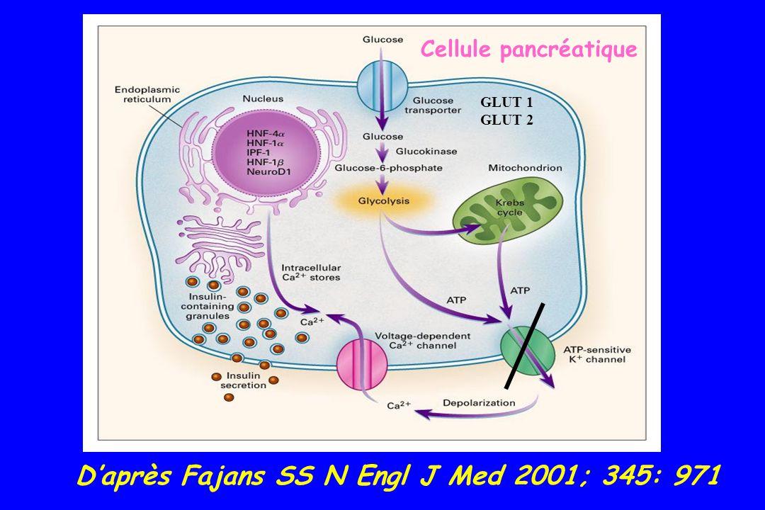 D'après Fajans SS N Engl J Med 2001; 345: 971