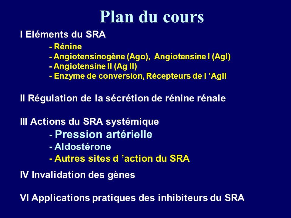 Plan du cours I Eléments du SRA - Rénine