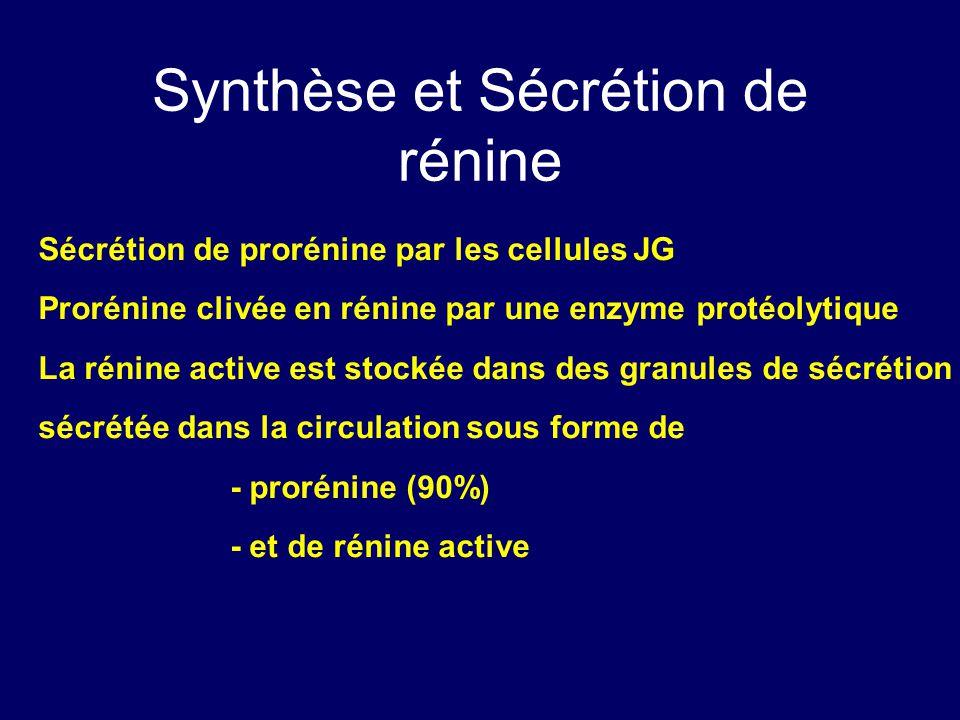 Synthèse et Sécrétion de rénine