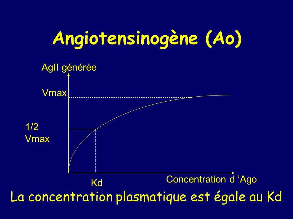 Angiotensinogène (Ao)
