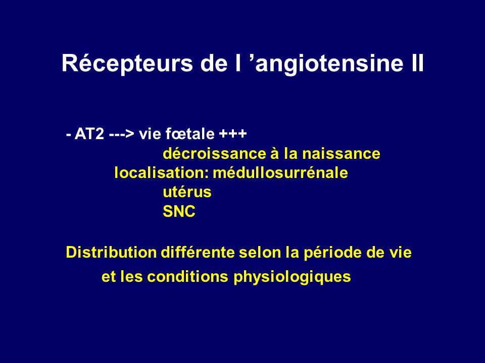 Récepteurs de l 'angiotensine II