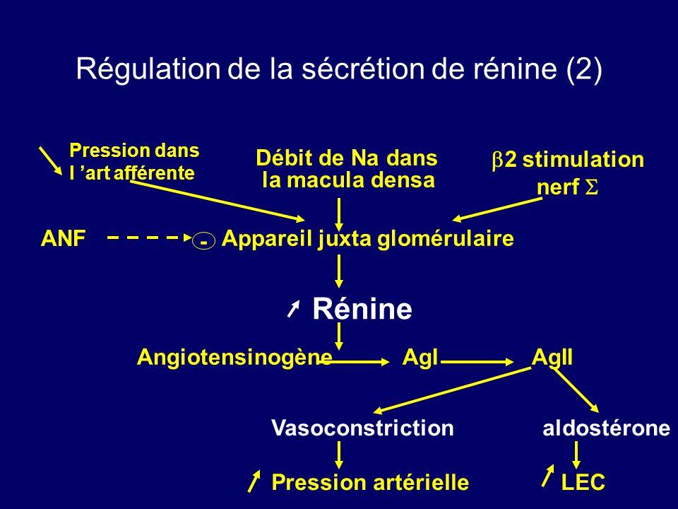 Régulation de la sécrétion de rénine (2)