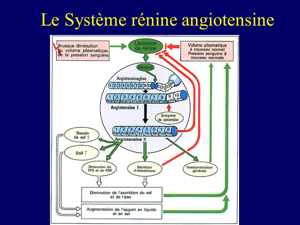 Le Système rénine angiotensine