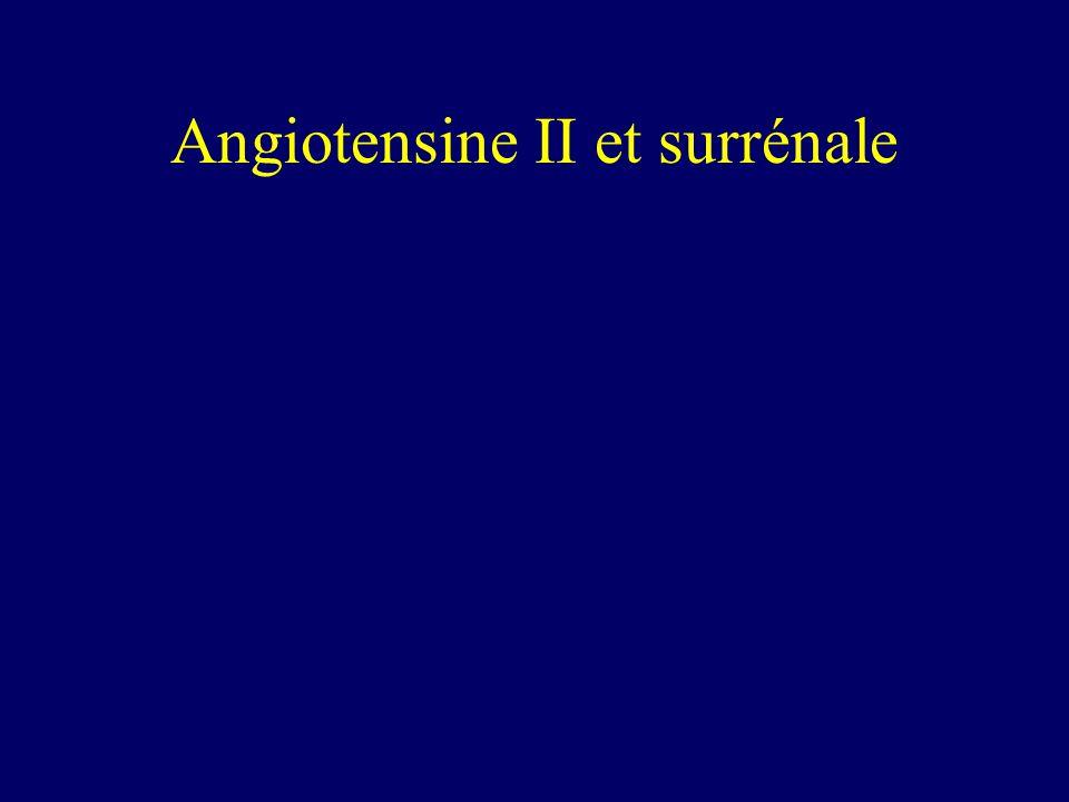 Angiotensine II et surrénale