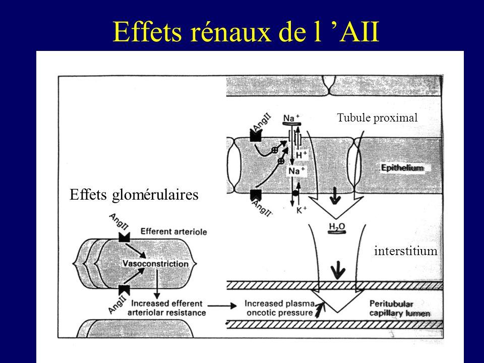 Effets rénaux de l 'AII Effets glomérulaires interstitium