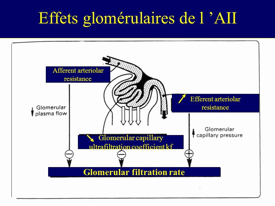 Effets glomérulaires de l 'AII
