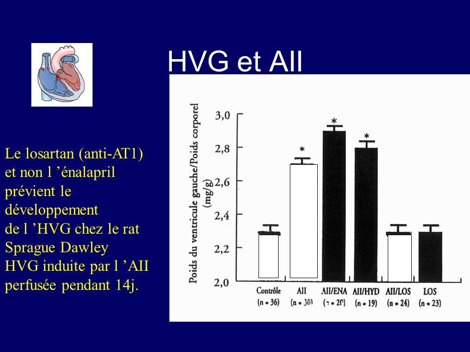 HVG et AII Le losartan (anti-AT1) et non l 'énalapril prévient le