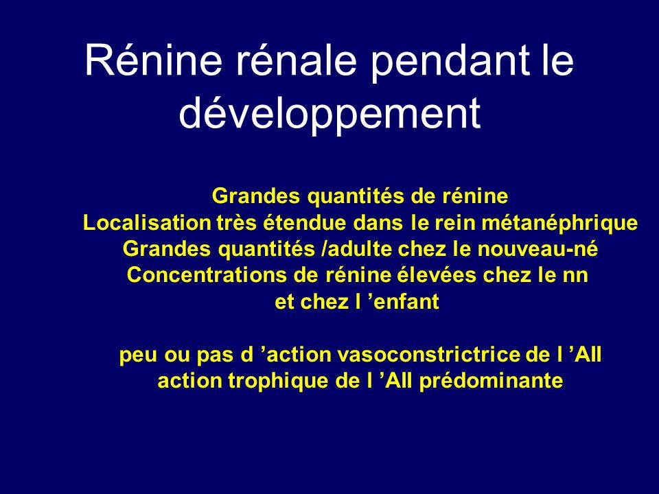 Rénine rénale pendant le développement