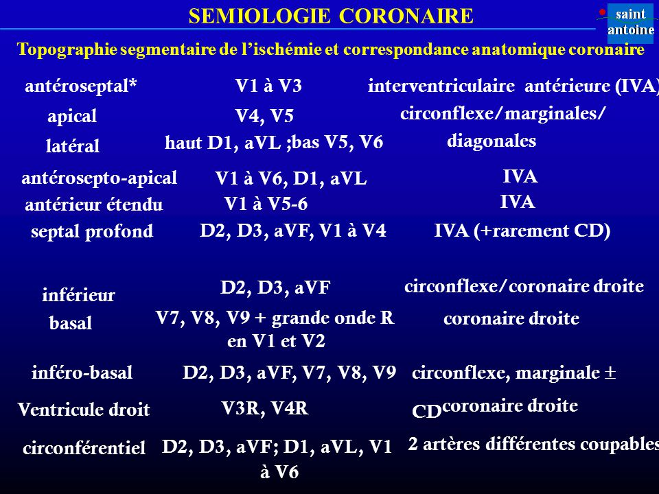 interventriculaire antérieure (IVA)