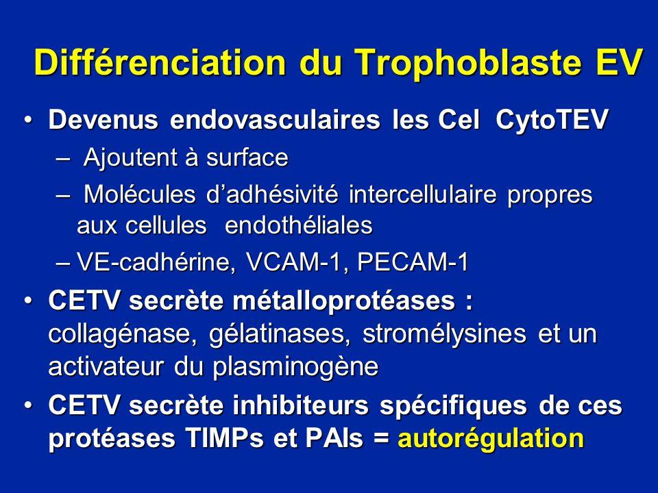 Différenciation du Trophoblaste EV