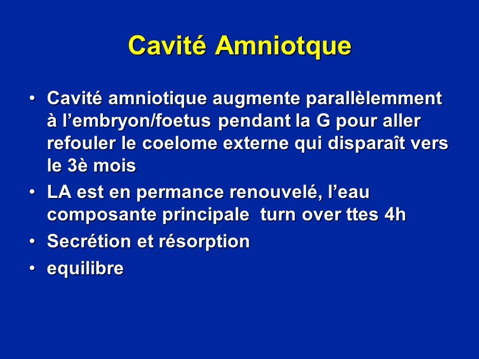 Cavité Amniotque
