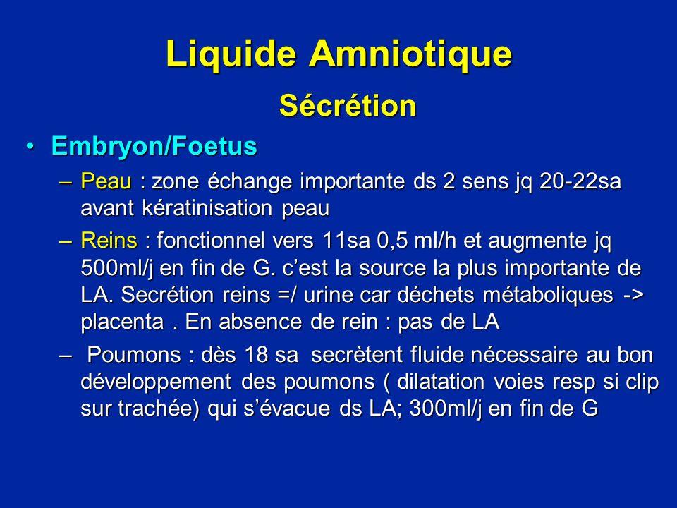 Liquide Amniotique Sécrétion Embryon/Foetus