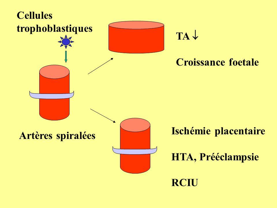 Cellules trophoblastiques. TA  Croissance foetale. Ischémie placentaire. HTA, Prééclampsie. RCIU.