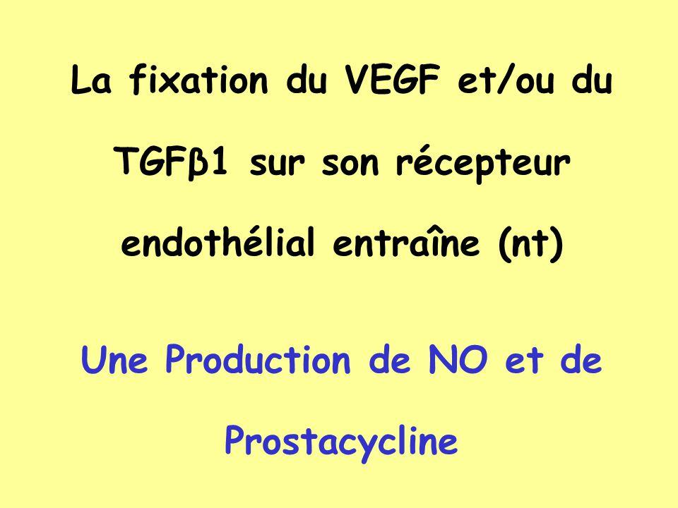 Une Production de NO et de Prostacycline