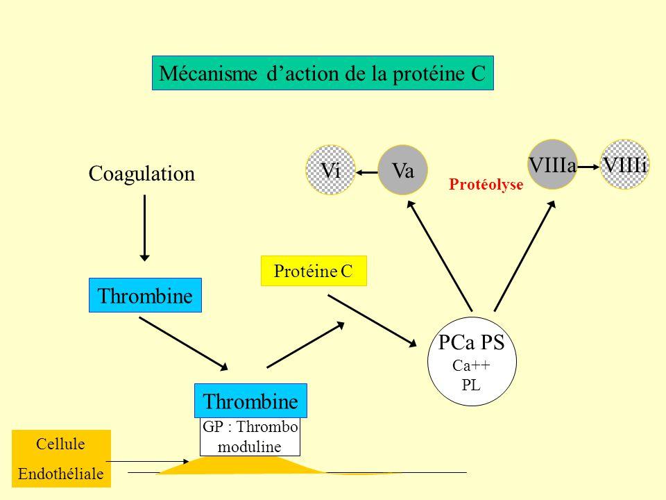 Mécanisme d'action de la protéine C