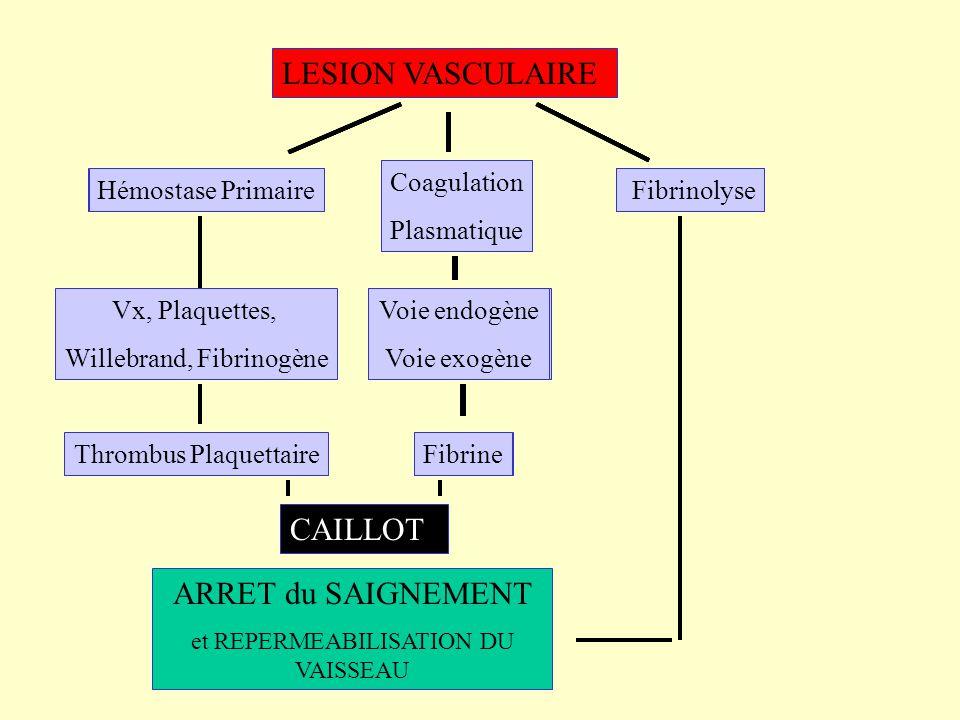 LESION VASCULAIRE CAILLOT ARRET du SAIGNEMENT Vx, Plaquettes,