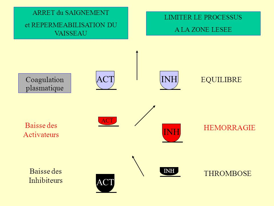 ACT Coagulation plasmatique EQUILIBRE Baisse des Activateurs