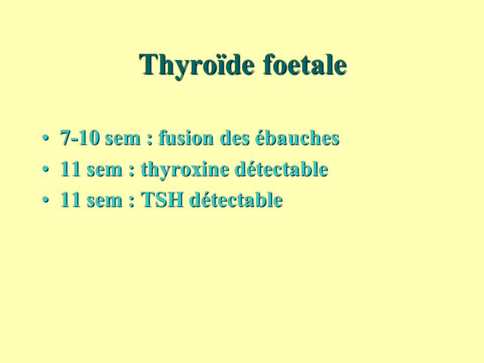 Thyroïde foetale 7-10 sem : fusion des ébauches