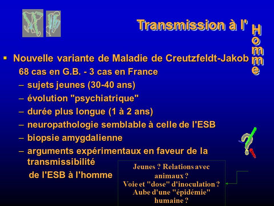 Transmission à l Nouvelle variante de Maladie de Creutzfeldt-Jakob. 68 cas en G.B. - 3 cas en France.