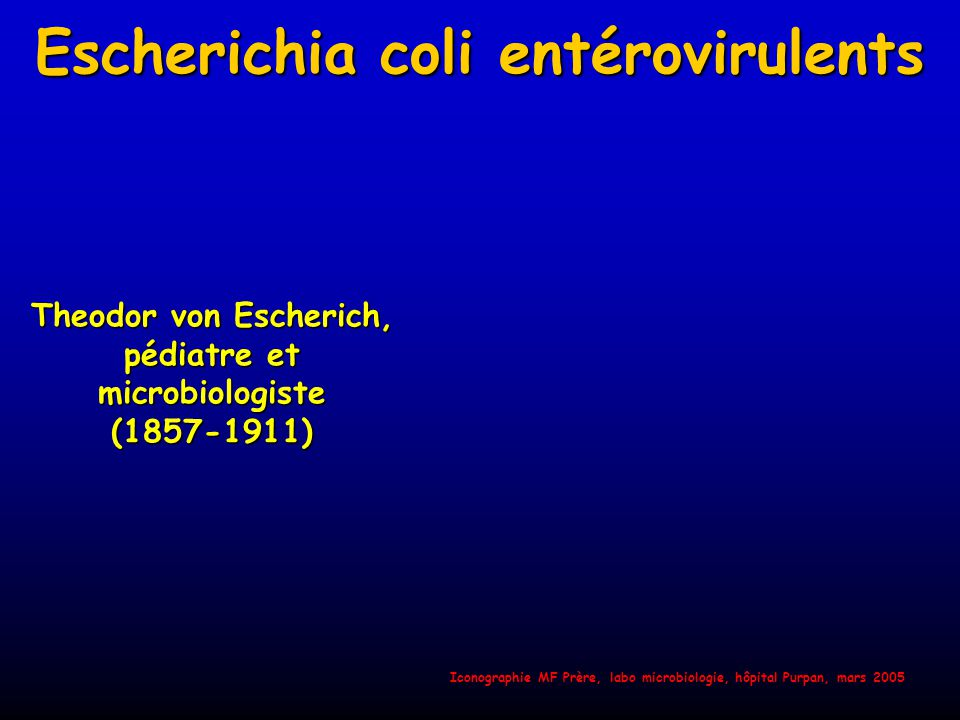 Escherichia coli entérovirulents