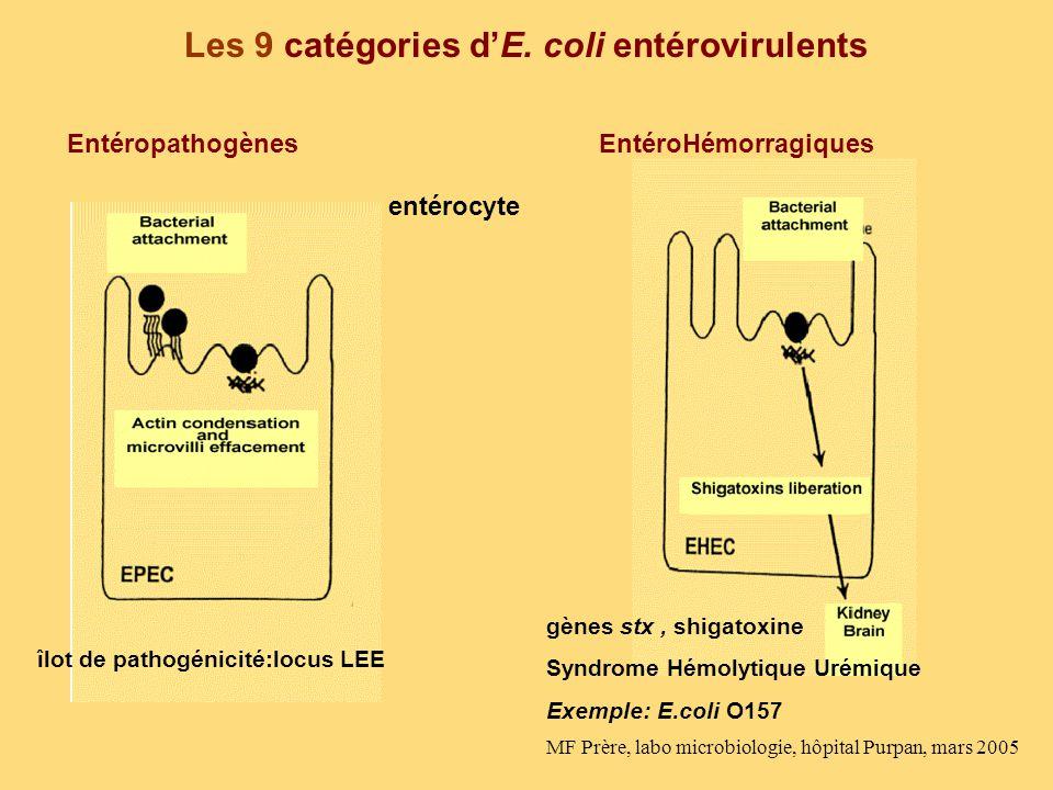 Les 9 catégories d'E. coli entérovirulents