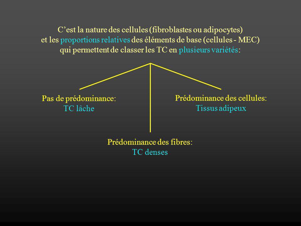 C'est la nature des cellules (fibroblastes ou adipocytes)