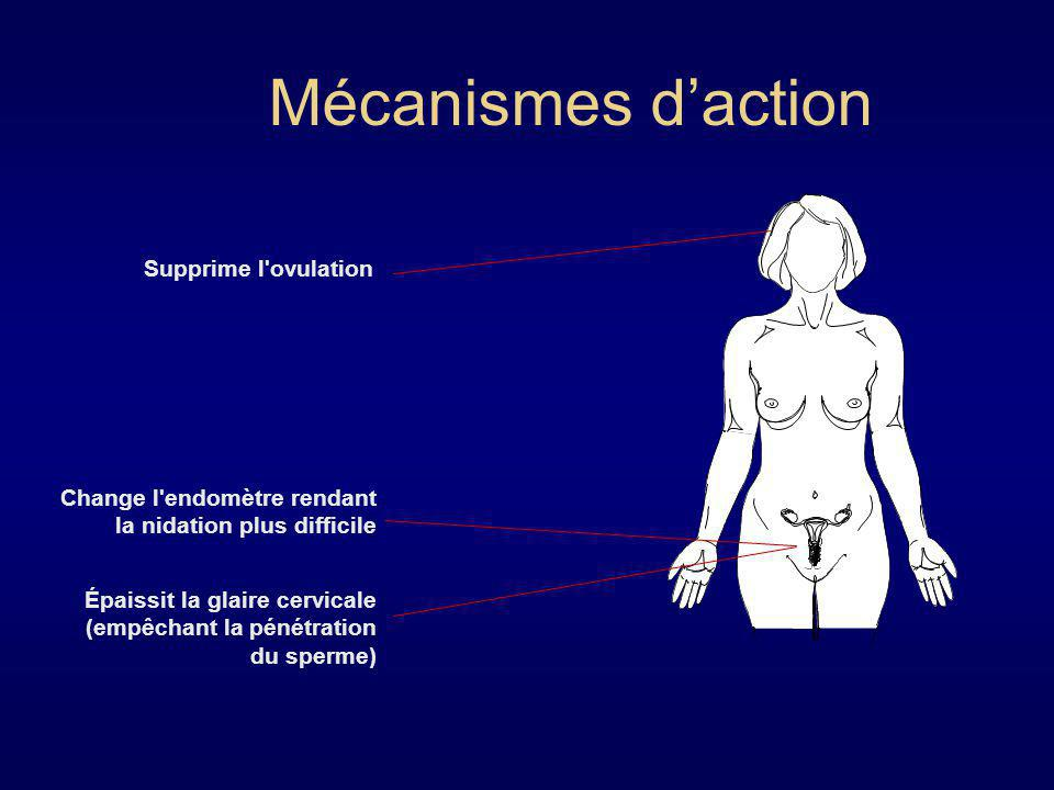 Mécanismes d'action Supprime l ovulation