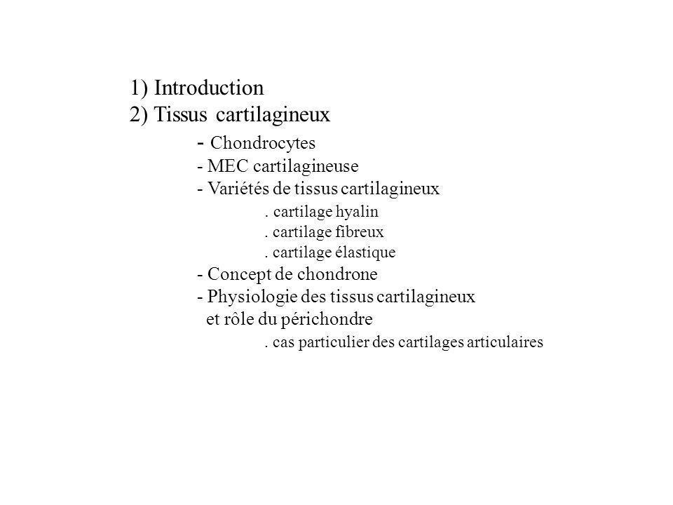 2) Tissus cartilagineux - Chondrocytes