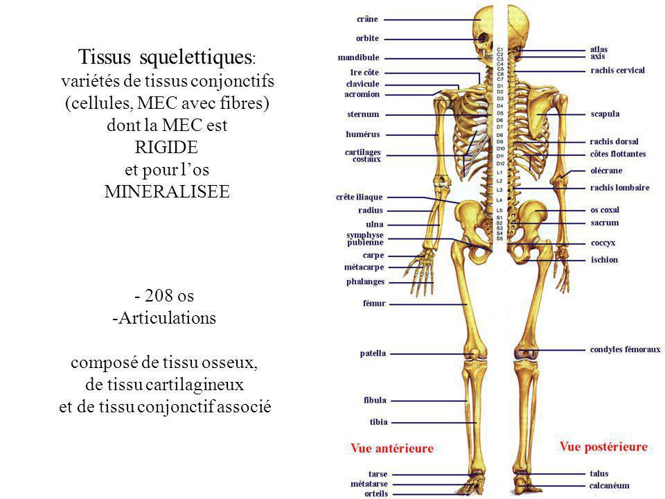Tissus squelettiques: