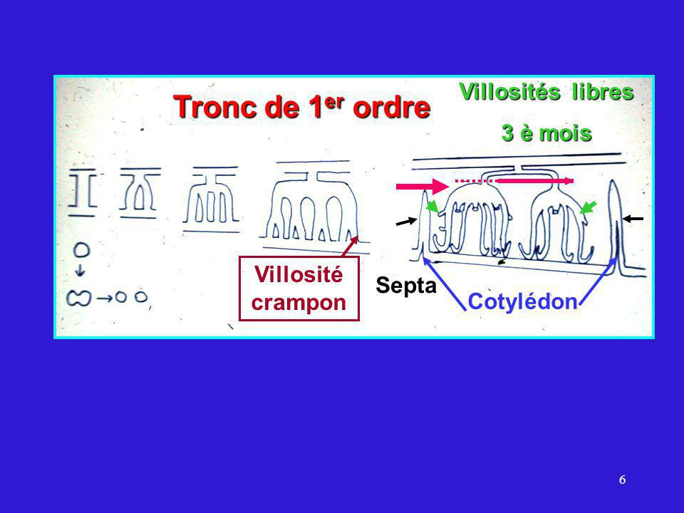 Tronc de 1er ordre Villosités libres 3 è mois Villosité crampon Septa