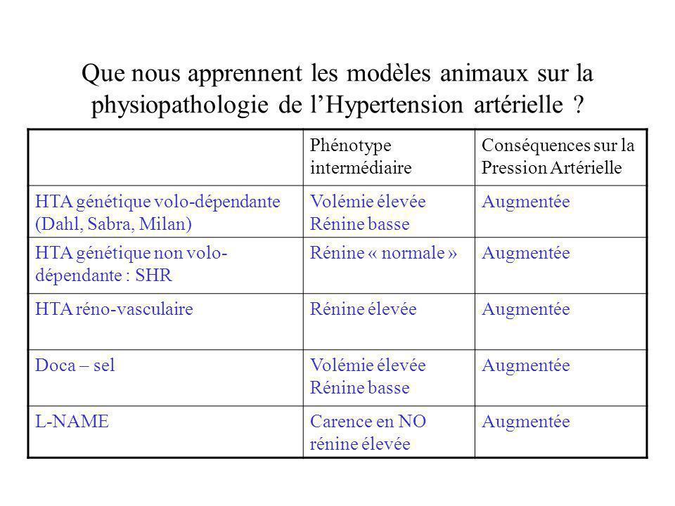 Que nous apprennent les modèles animaux sur la physiopathologie de l'Hypertension artérielle