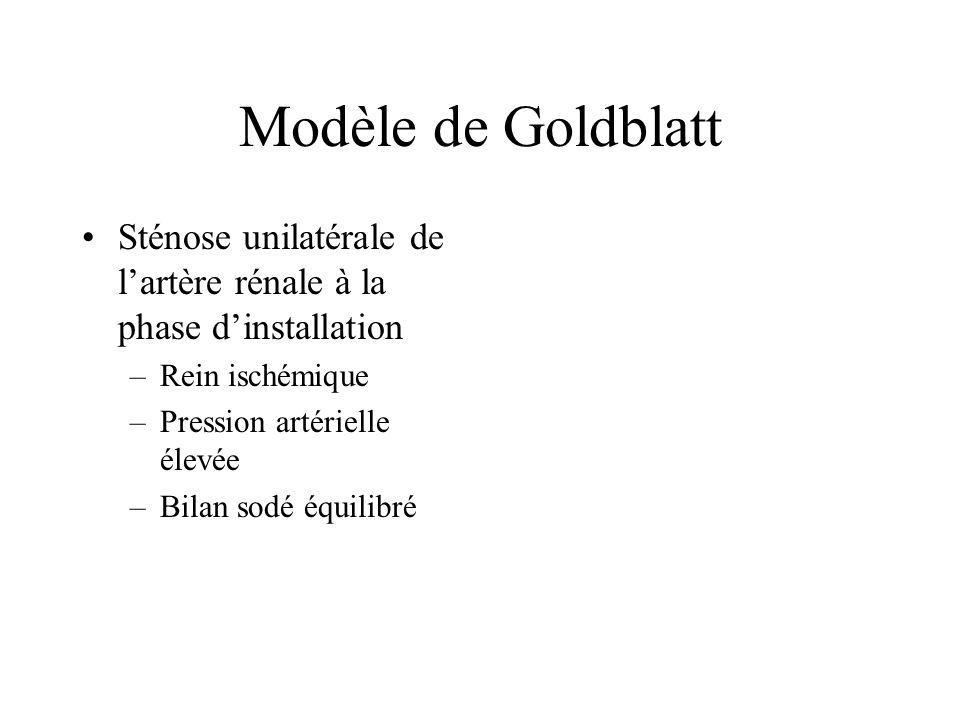 Modèle de Goldblatt Sténose unilatérale de l'artère rénale à la phase d'installation. Rein ischémique.