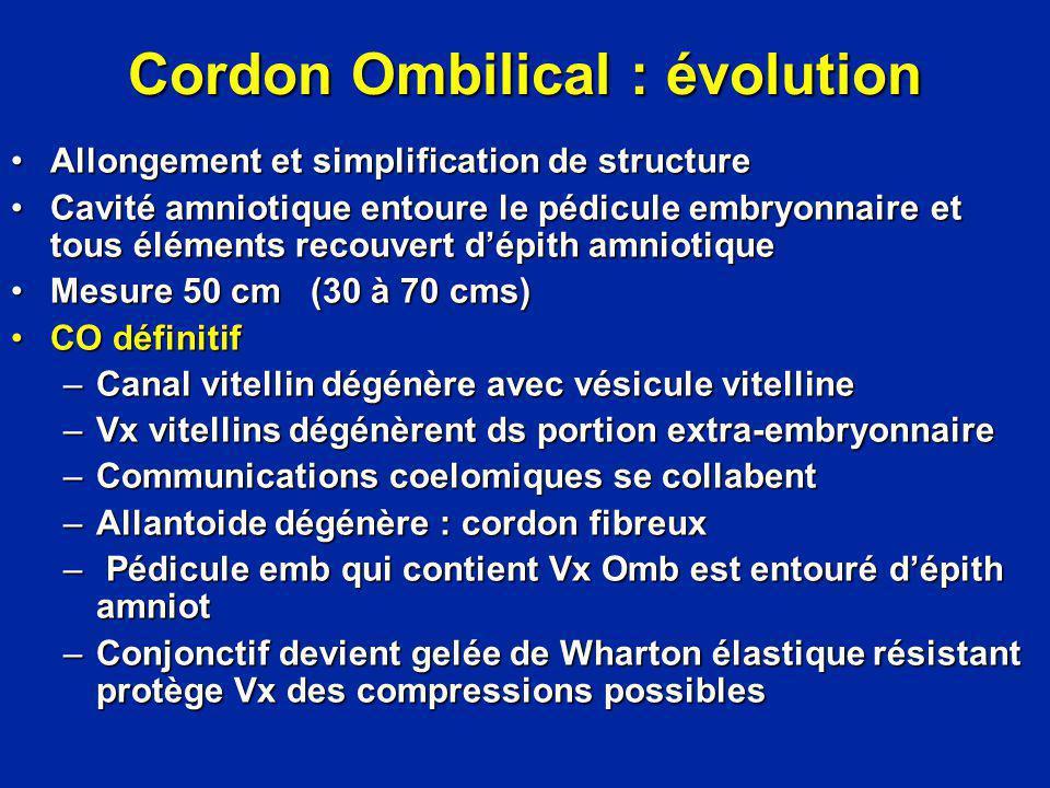 Cordon Ombilical : évolution