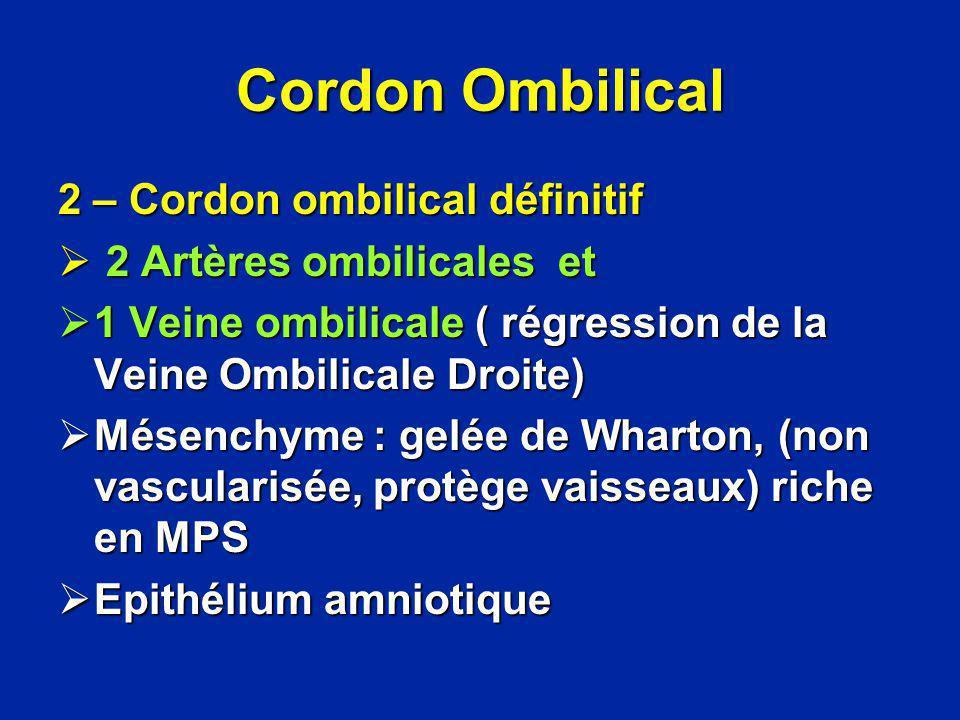 Cordon Ombilical 2 – Cordon ombilical définitif