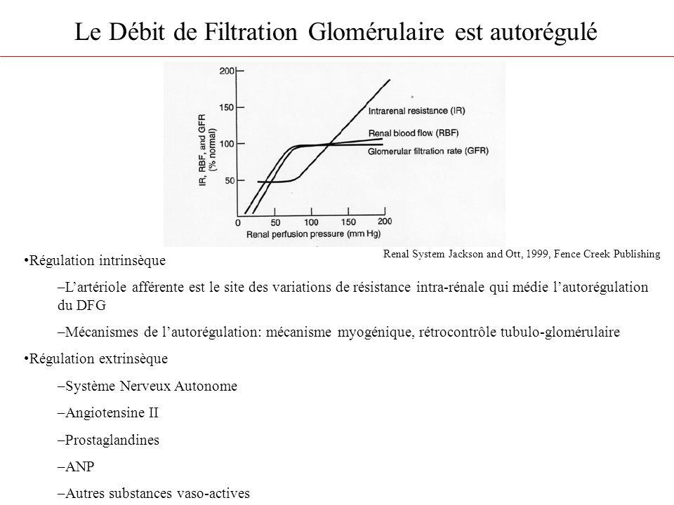 Le Débit de Filtration Glomérulaire est autorégulé