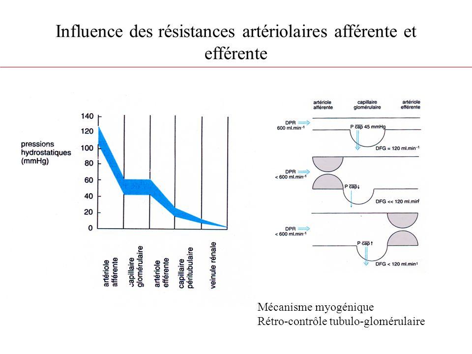Influence des résistances artériolaires afférente et efférente