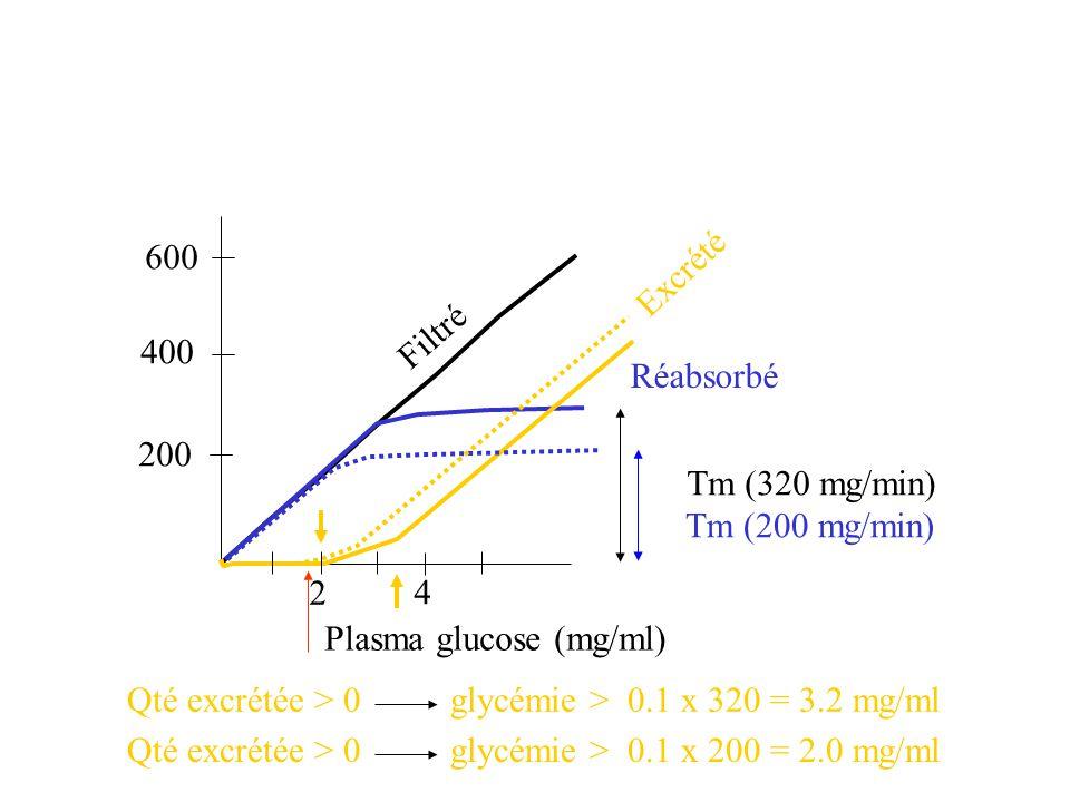 600 Excrété. Filtré. 400. Réabsorbé. 200. Tm (320 mg/min) Tm (200 mg/min) Qté excrétée > 0 glycémie > 0.1 x 200 = 2.0 mg/ml.